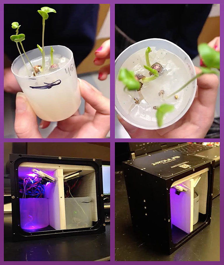 NDC Duquesnay plantcup ardulab