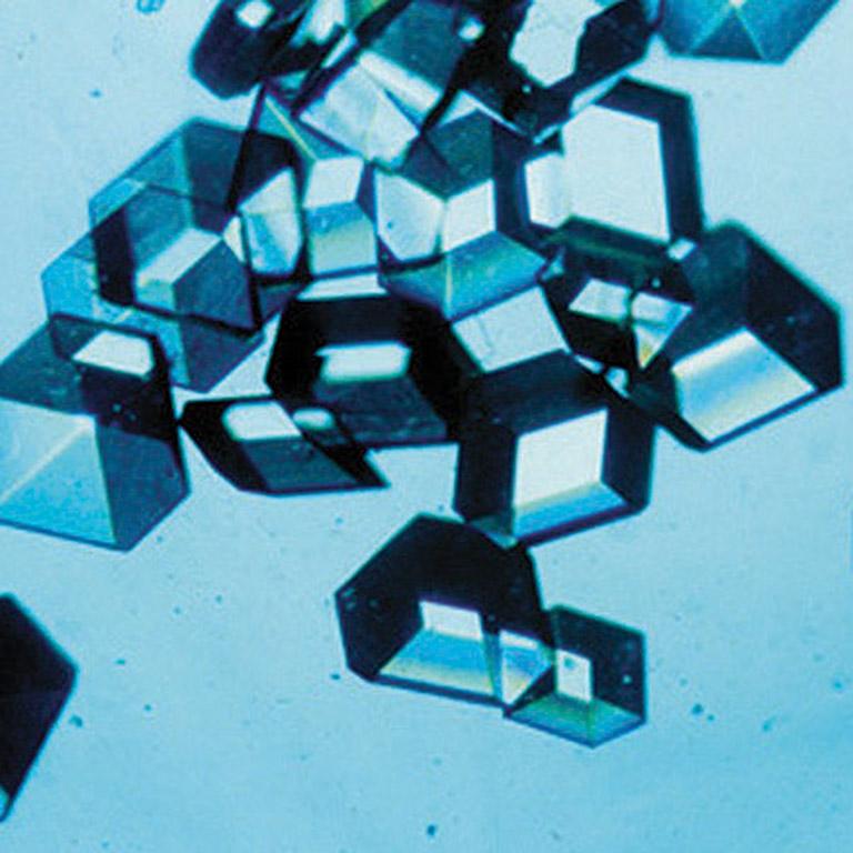 blue crystal eli lily