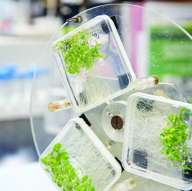plant growth containers wheel