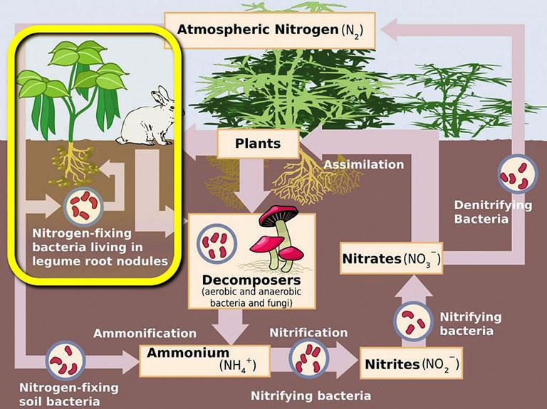 atmospheroc nitrogen cycle