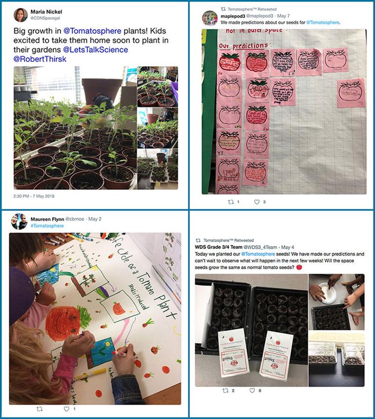 tomatosphere tweets 4 images grid