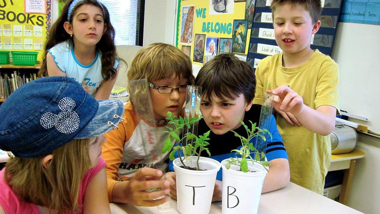 tomatosphere students measuring seeds