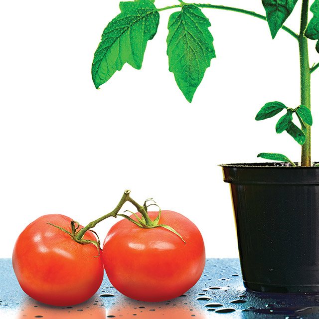 tomatosphere feature post image cover