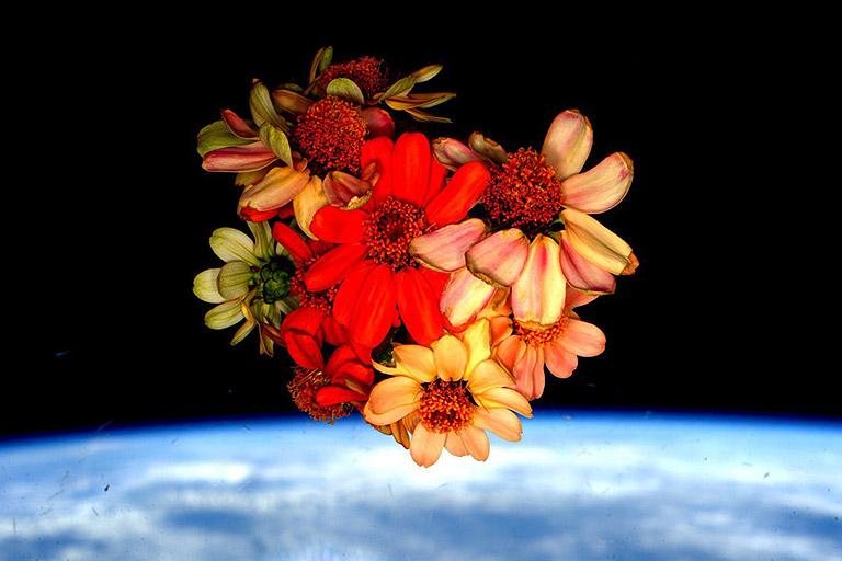 zinnias bouquet cupola