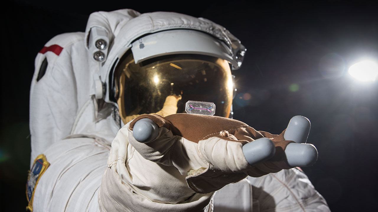 tissue chip astronaut sun