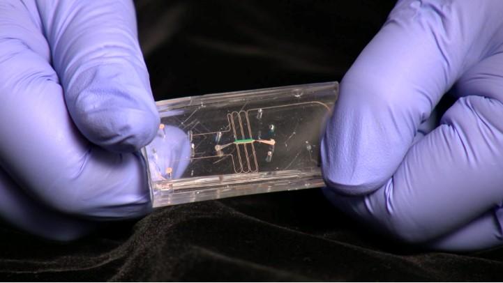 education blog tissue chip NIH NCATS