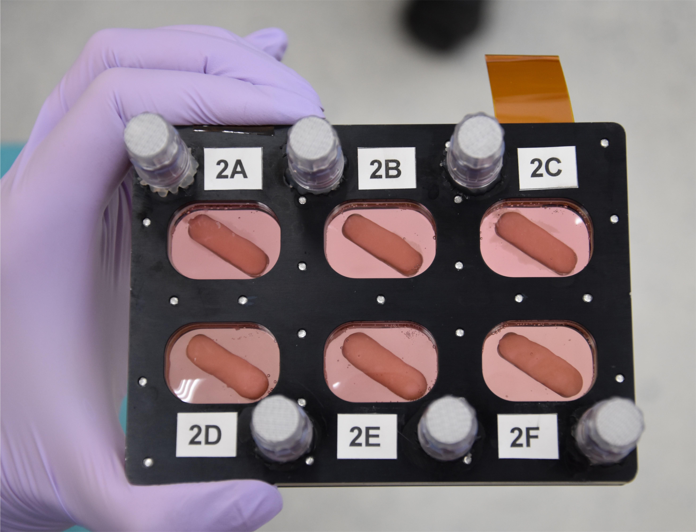 osteoblasts LaunchPad Medical