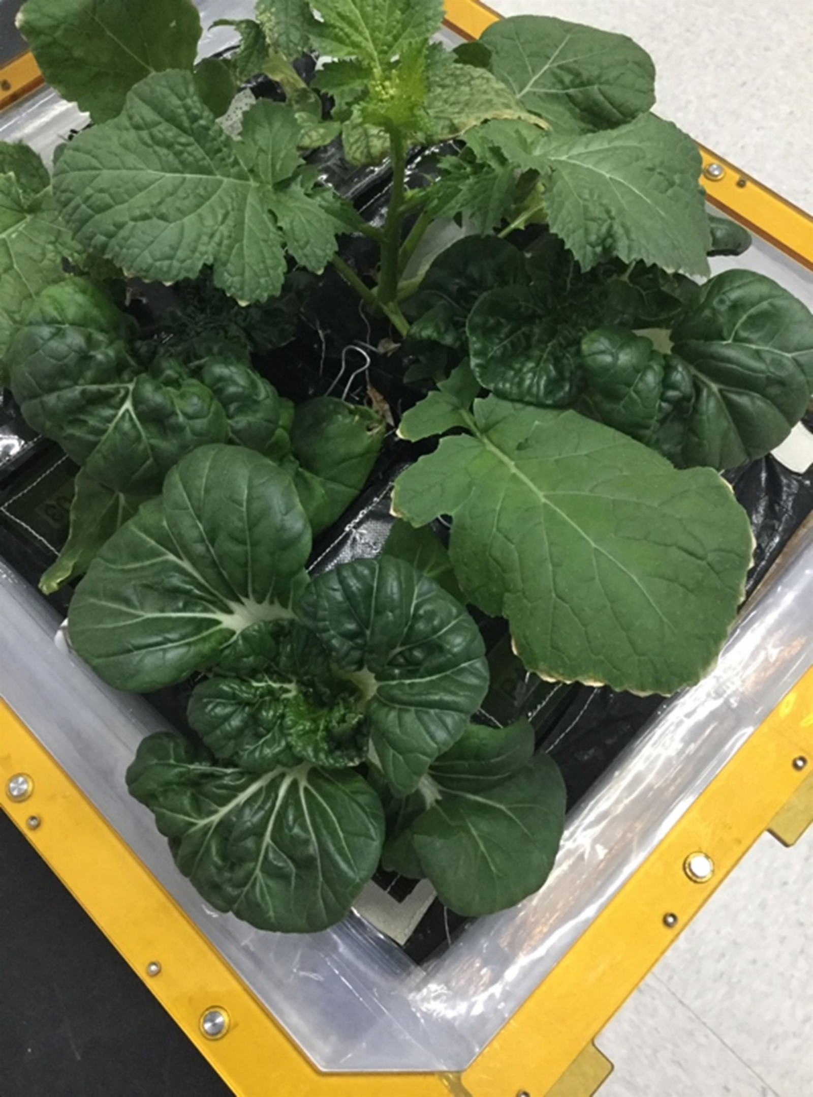 plants growing in sspf 1600