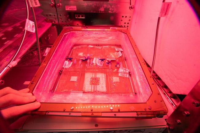 space algae culture bags 1