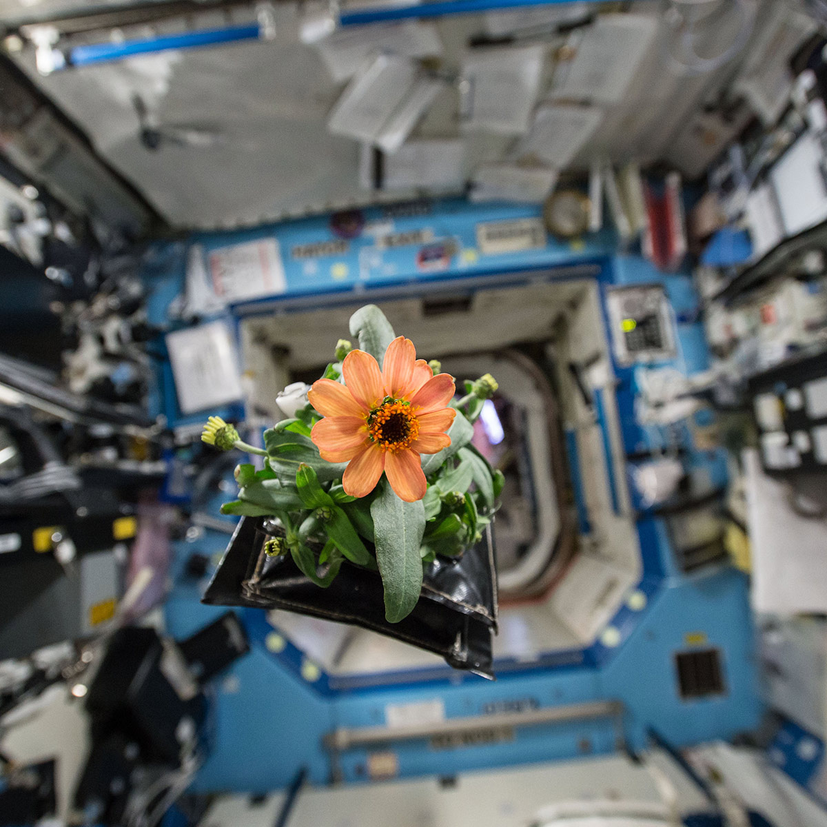 zinnia space station